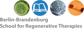 Berlin-Brandeburg School of Regenerative Therapies